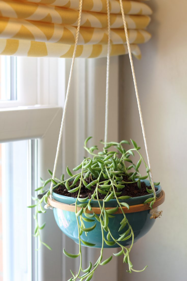Hanging Succulents - How to Make a Hanging Succulent Planter